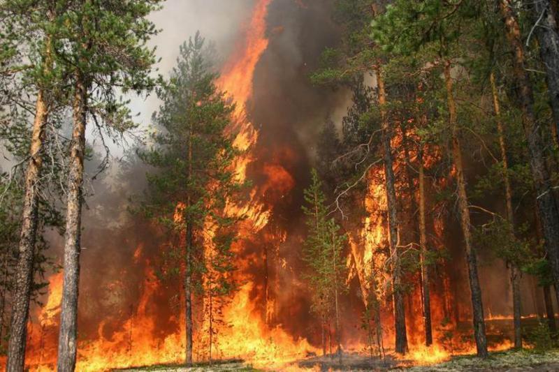 Пожары в лесах реферат 2238